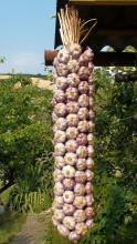 Česnekový cop Vekan 8 kg do kulata